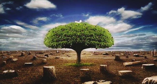 novo Código Florestal aprovado destruição meio ambiente
