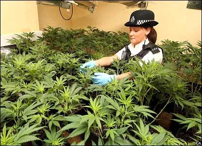 legalização maconha