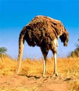 Mídia avestruz