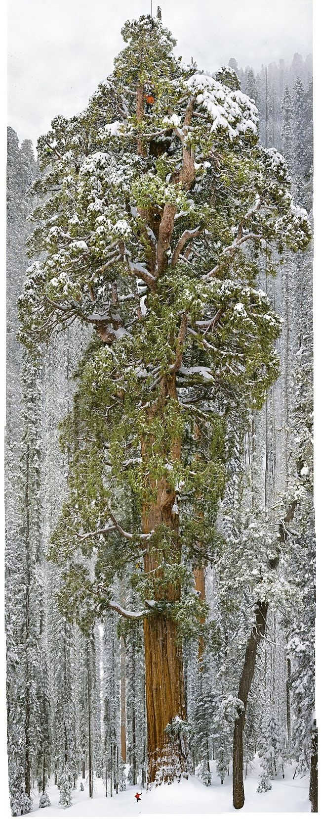 foto árvore a presidente