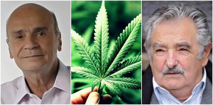 dráuzio varella legalização maconha uruguai