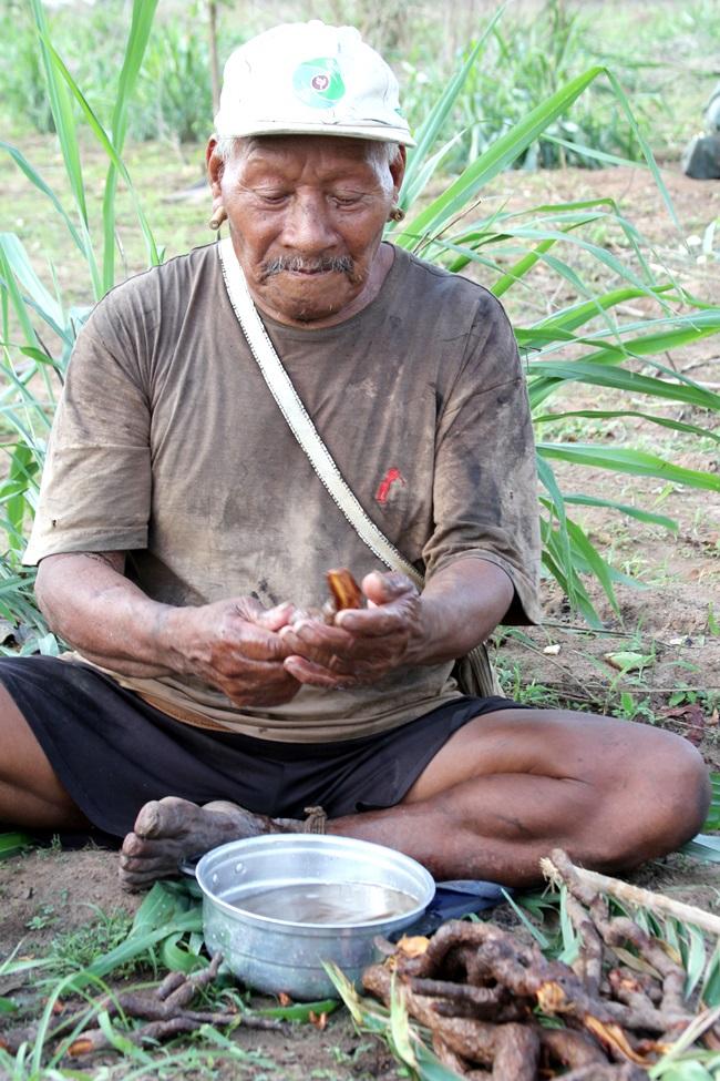 indio planta medicinal saude brasil