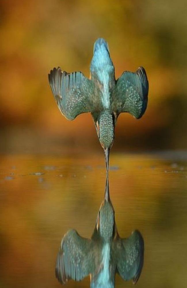 foto demorou 6 anos martim-pescador