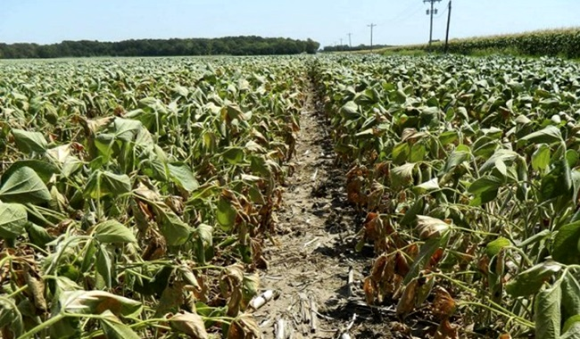 ameaça saúde agricultura mudanças climáticas