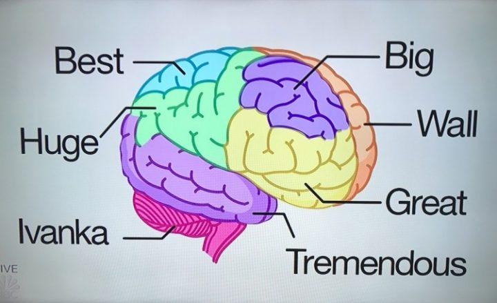 cérebro donald trump