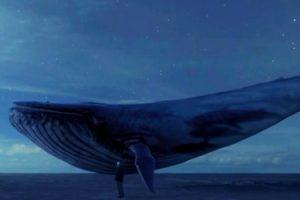 baleia-azul-jogo-suicida-preocupa