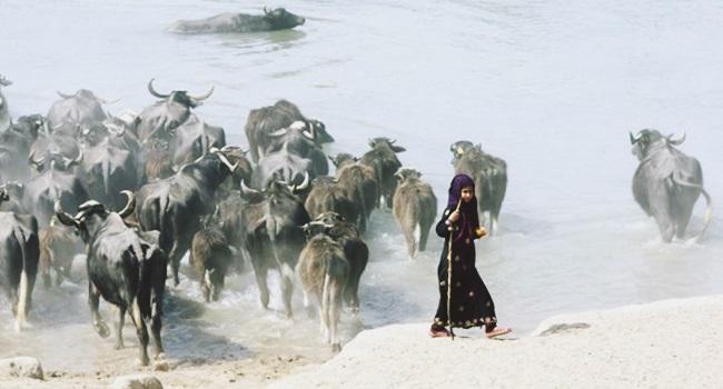 guerra mundo água síria iraque turquia