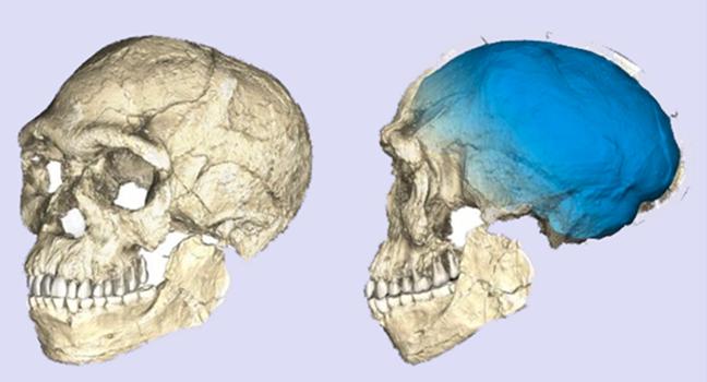 descoberta homo sapiens revolucionar evolução humana