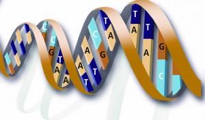 DNA humano