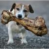 cachorro-rua-bispo