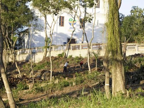 árvores desmatamento jornada mundial juventude