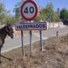 jovem-espanhol-desempregado-cavalo