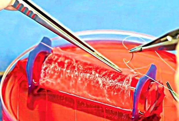 vagina criada laboratório