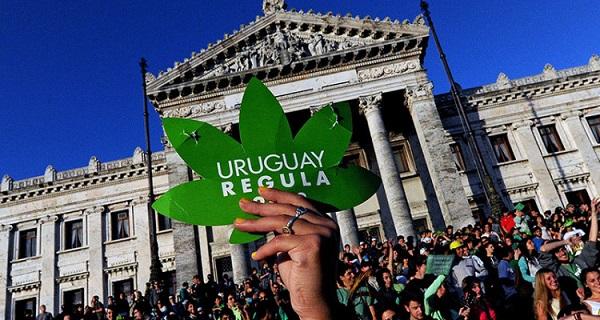 maconha uruguai legalização