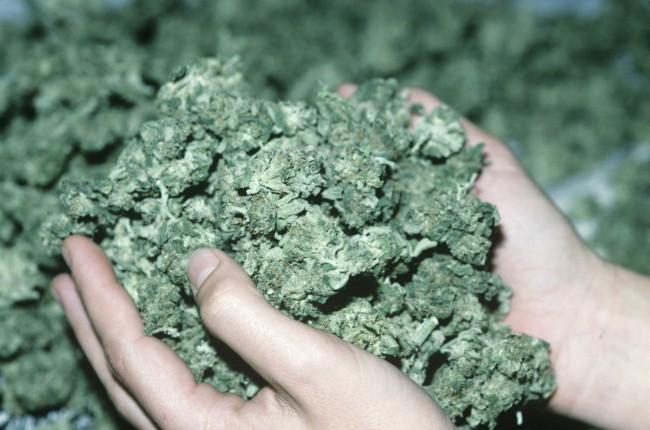 maconha eua legalização droga