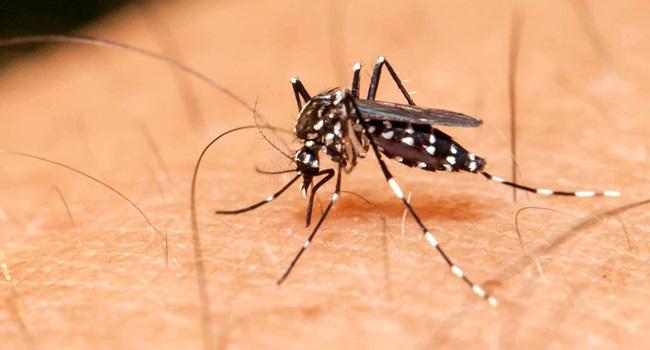 zika vírus cientista distúrbio cerebral adulto