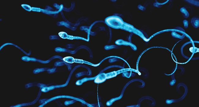 homens ocidentais redução drástica espermatozoides estudo