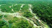 michel-temer-acabar-floresta-nacional-jamanxim