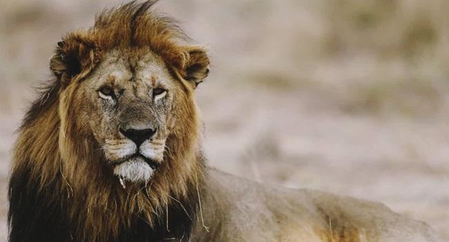 Extinção animais vertebrados humanos financia a guerra contra a própria vida