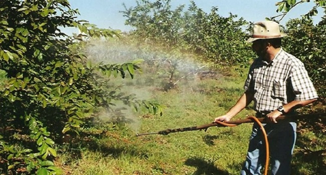 Ciência cidadã reage mazelas império dos transgênicos agrotóxicos