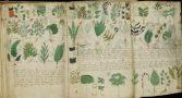 historiador-decifra-um-dos-manuscritos