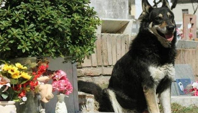 morre cachorro visitando o túmulo de seu dono argentina
