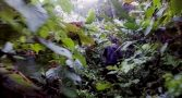 selva-mais-perigosa-da-america-latina-travessia