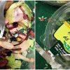 perereca-salada-andressa
