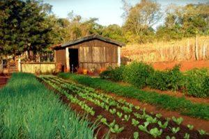 diferenca-entre-o-produto-organico-e-o-agroecologico
