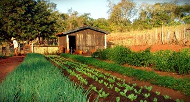 diferença entre o produto orgânico e o agroecológico