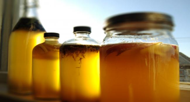 kombucha benefícios bebida chá saúde veganismo alimentação