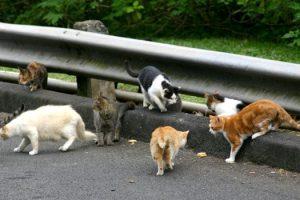 cidade-banir-todos-os-gatos-nova-zelandia