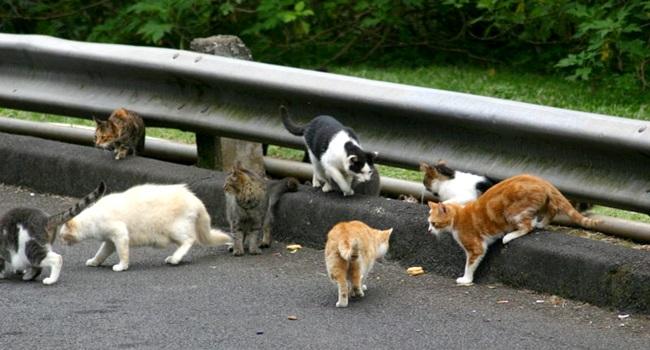 pequena cidade pretende banir gatos nova zelândia