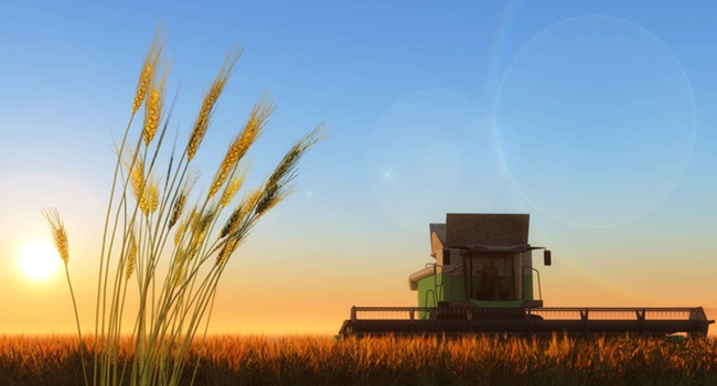 Produtores de grãos veneno agrotóxico veneno glifosato