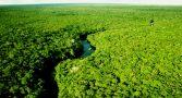 propostas-haddad-bolsonaro-meio-ambiente