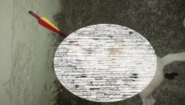 cachorro morre flecha santa catarina