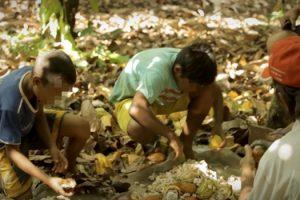 chocolate-brasil-contaminado-trabalho-infantil