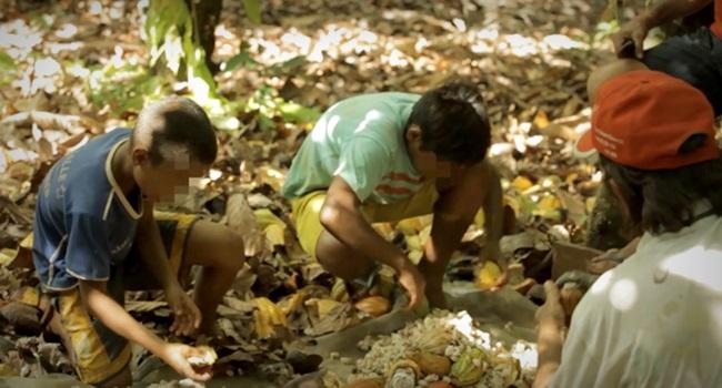 chocolate venda Brasil contaminado trabalho infantil Pará