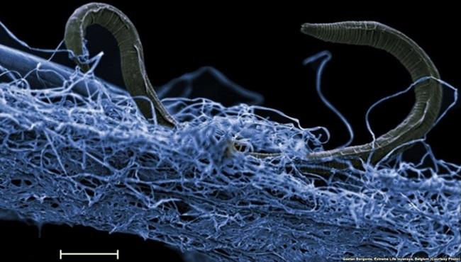 Ecossistema vive embaixo da terra dobro dos oceanos do planeta