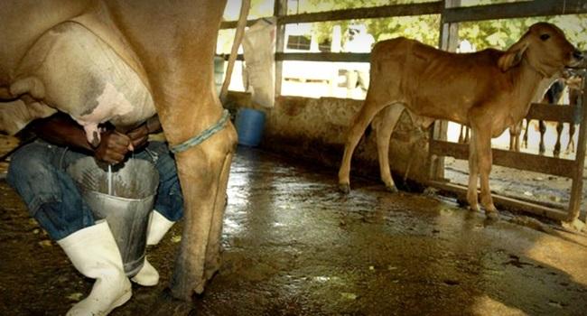 produtores de leite bravos Jair Bolsonaro agricultura governo mercado