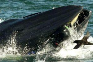 homem-sobrevive-apos-ser-parcialmente-engolido-por-baleia