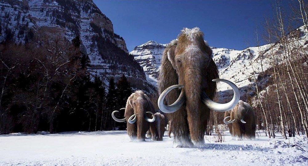 mamute volta extinção