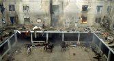 drauzio-varella-quem-aplaudiu-massacre-do-carandiru-hoje-cobra-fim-da-violencia