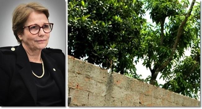 mortes de jovens buscavam frutas e a ministra da Agricultura