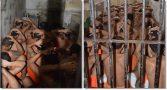 presos-cela-construida-para-caber-6