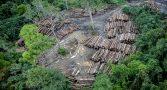 desmatamento-na-amazonia-cresce-e-602-cientistas-europeus-se-manifestam