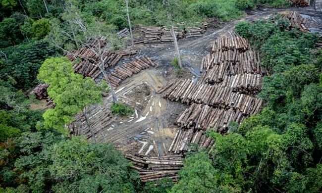 Desmatamento na Amazônia cresce cientistas europeus manifestam meio ambiente bolsonaro mundo