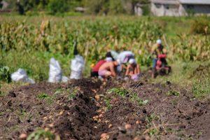 agricultores-sergio-moro