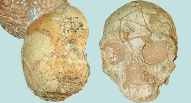 descoberta reescrever a nossa história evolução humana crânios
