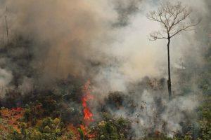 brasil-em-chamas-rua-te-chama-manifestacao